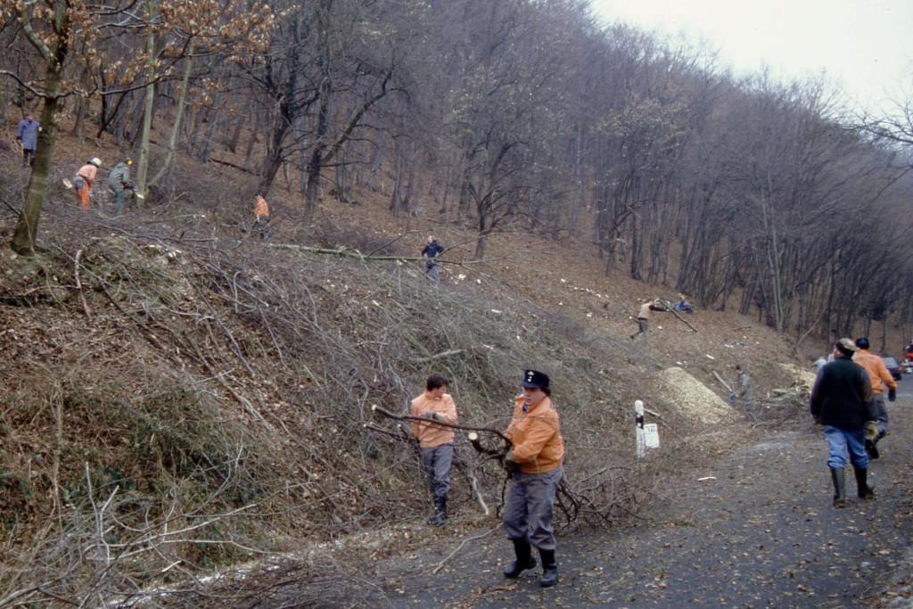 Baumschnitt am Saalberg